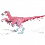 Flamingociraptor